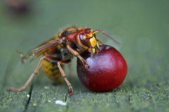 Fruchtschmaus