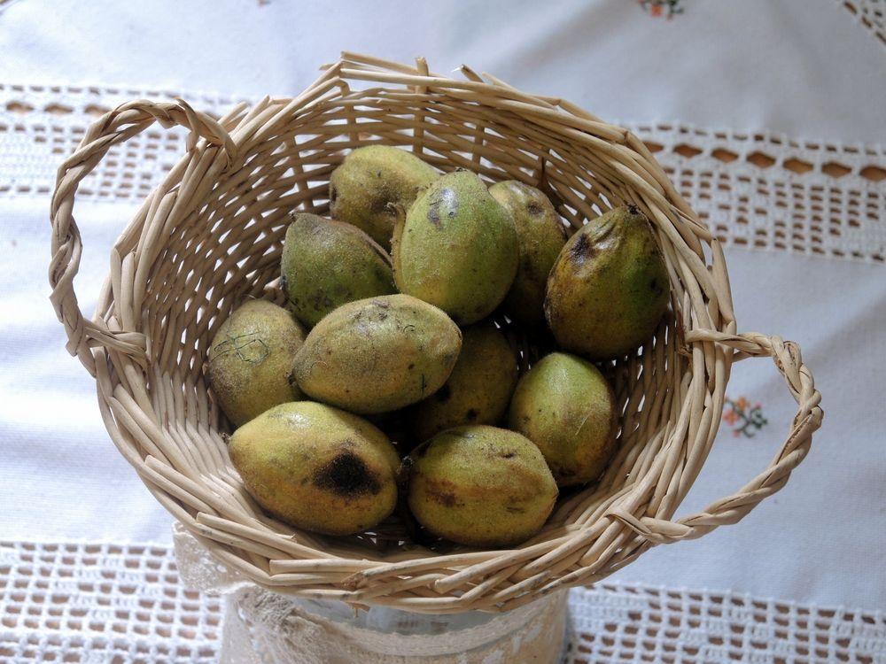 Früchte der Butternußbaumes