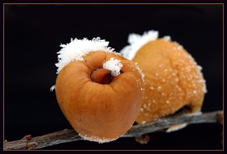 Früchte der Japanischen Zierquitte