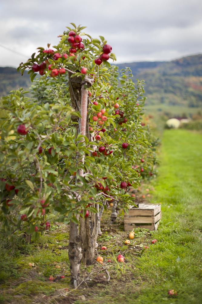 Früchte des Herbst