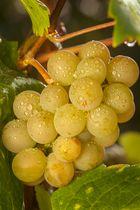 Früchte des Herbst2