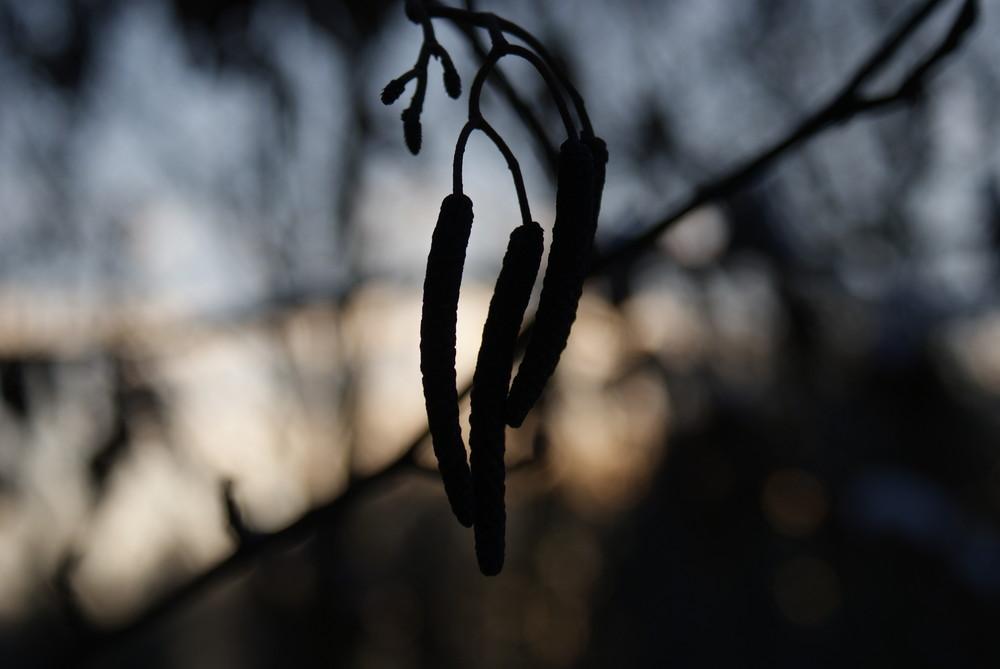 Früchte eines Busches