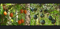 Früchte in den Bergen von Lutpyin