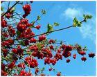 -Früchte vom Herbst als Farbtupfer im Frühling-