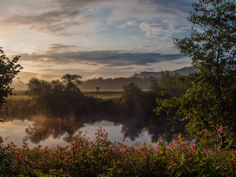Früh morgens auf dem Natursteig Sieg