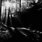 Früh Morgens im Wald