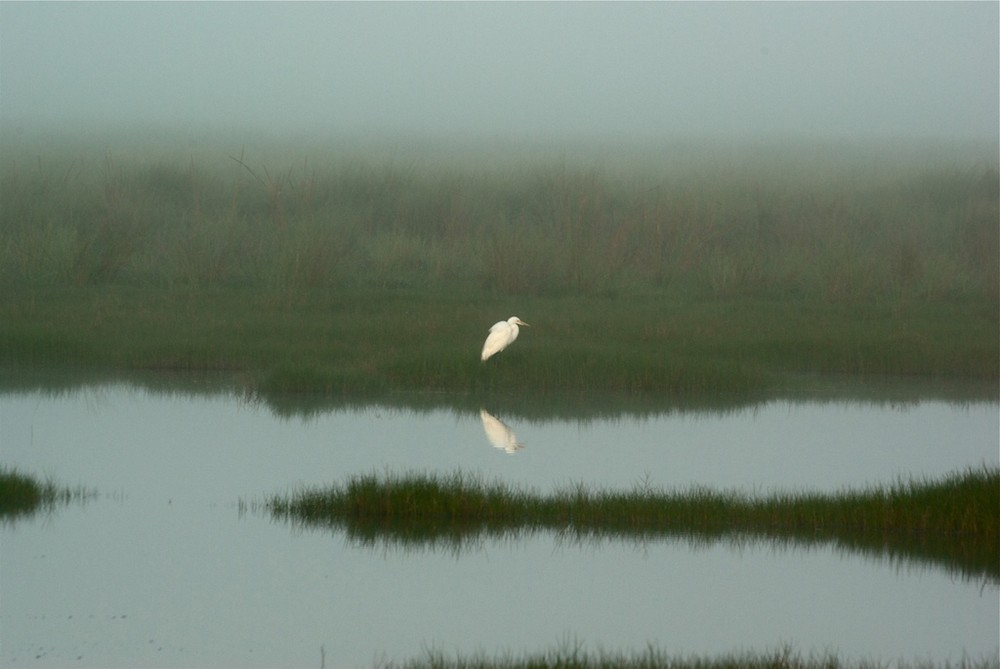 Früh morgens in den Everglades