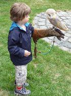 früh übt sich der Falkner