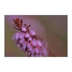 Frühblüher [ I ]