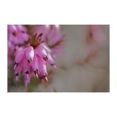 Frühblüher [ II ]
