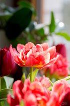 Frühblüher in der Vase