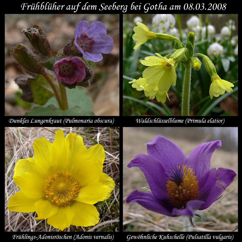 Fruhbluher Zum Frauentag Foto Bild Pflanzen Pilze Flechten