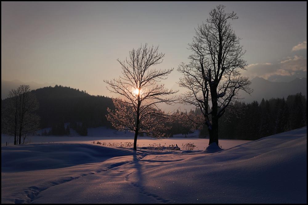 ~ frühe Wintersonne I ~