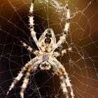 Früher fand ich Spinnen immer eklig...