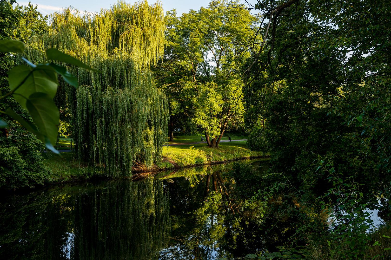 Früher Morgen im Bürgerpark in Braunschweig_5