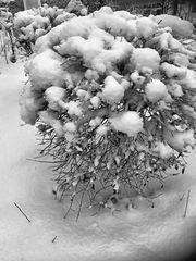 Früher Schnee