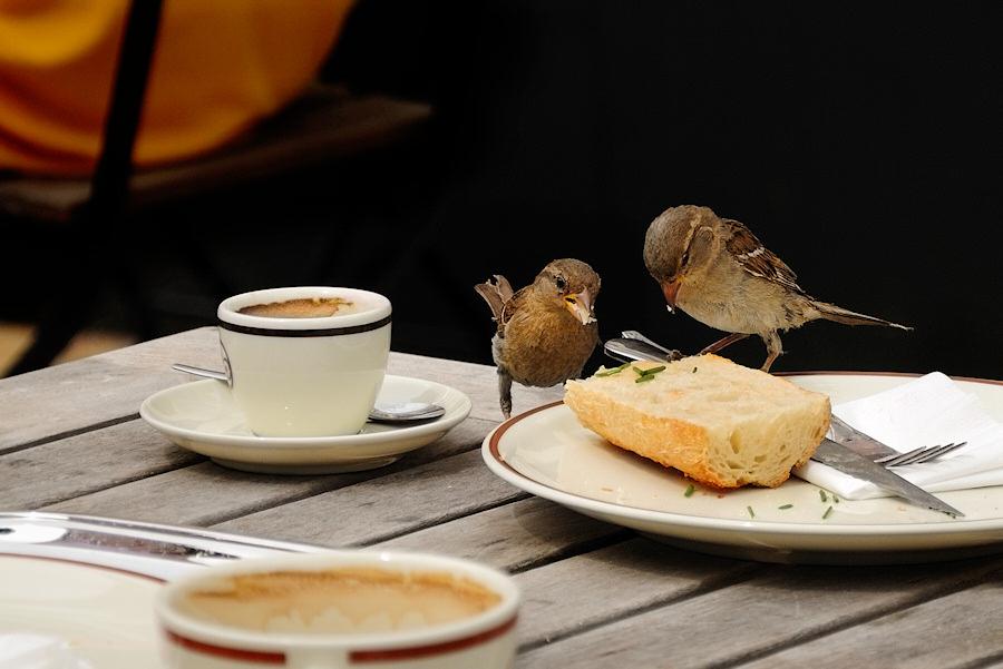Früher war das Frühstück hier aber besser, Liebling