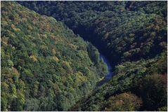 Frühherbstlicher Urwald