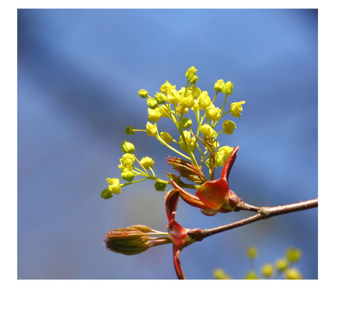Frühjahr 04