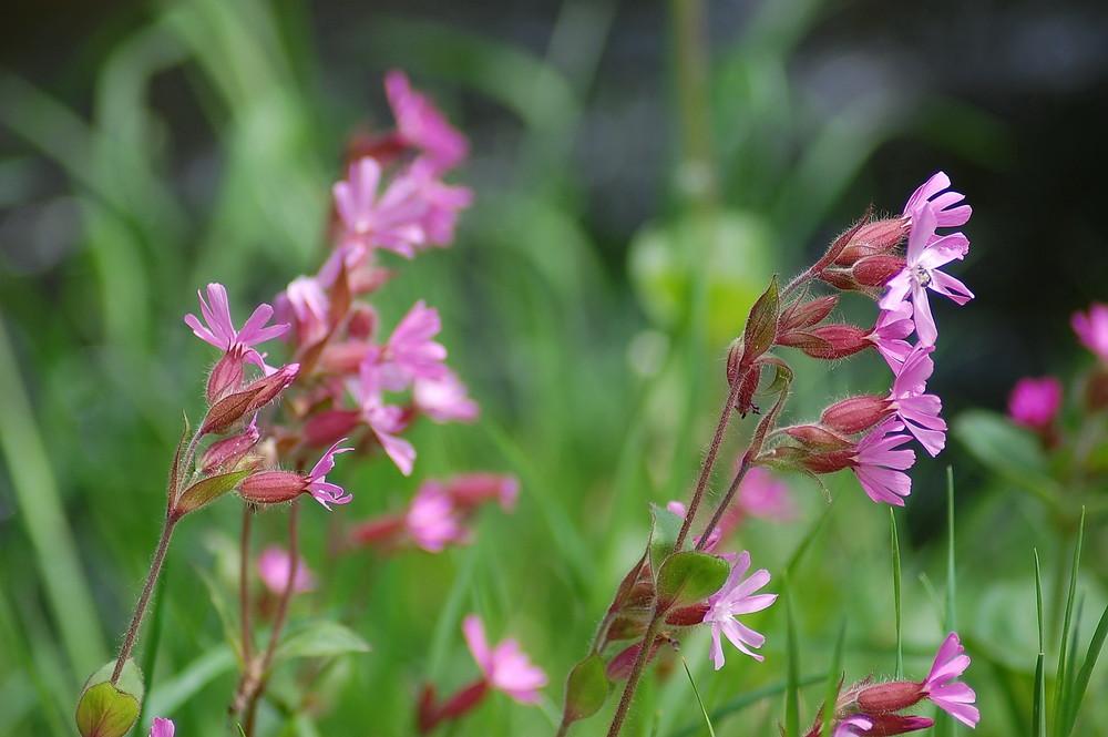 Frühjahr im Tiergarten
