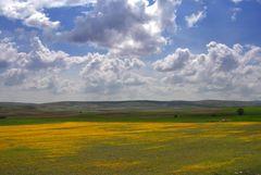 Frühjahr in Anatolien