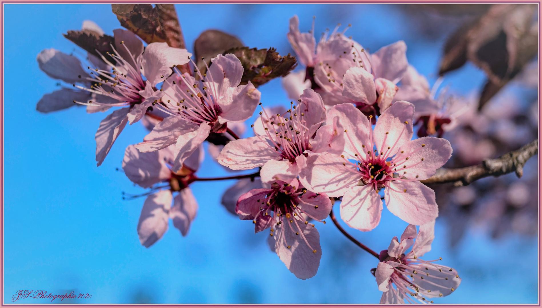 Frühjahrs-Gruß