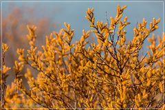 Frühjahrsfarbe im Moor