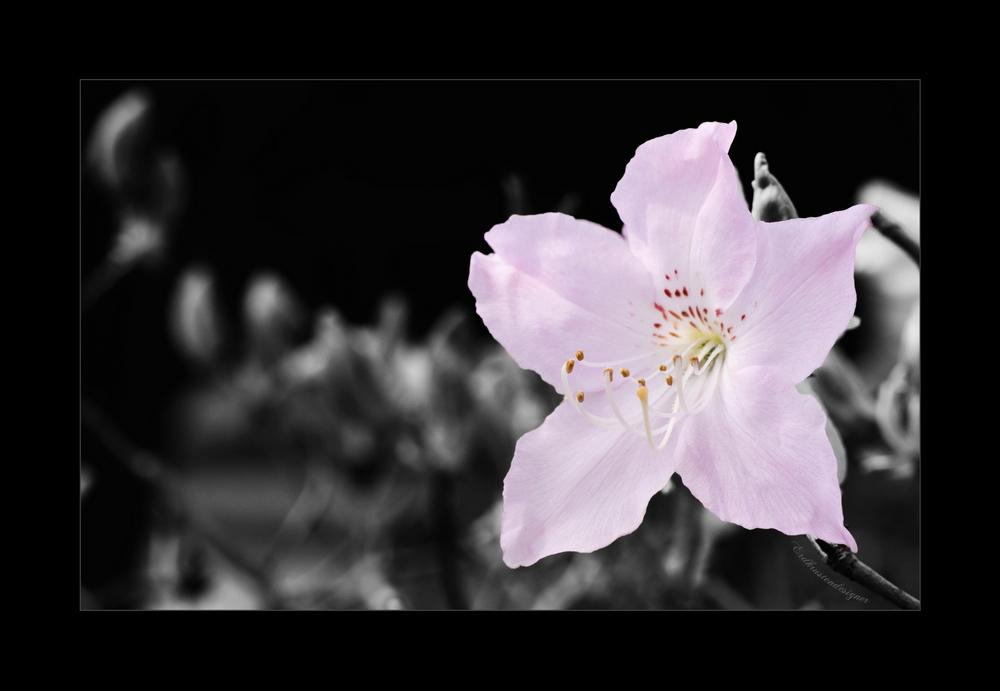 Frühjahrskind