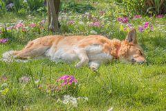 Frühjahrsmüdigkeit