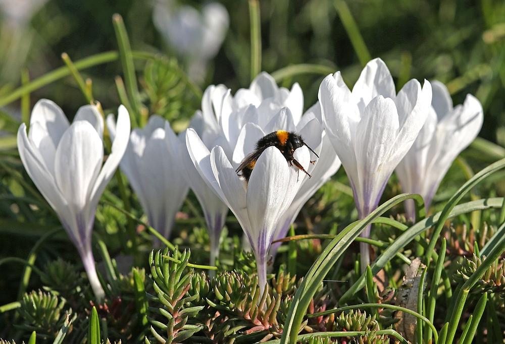 Frühjahrsschwips