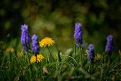 Frühjahrssymbole