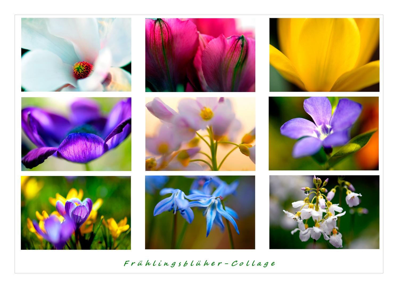 Frühlblüher-Collage