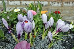 Frühlig im Garten