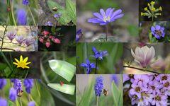 Frühligshaft