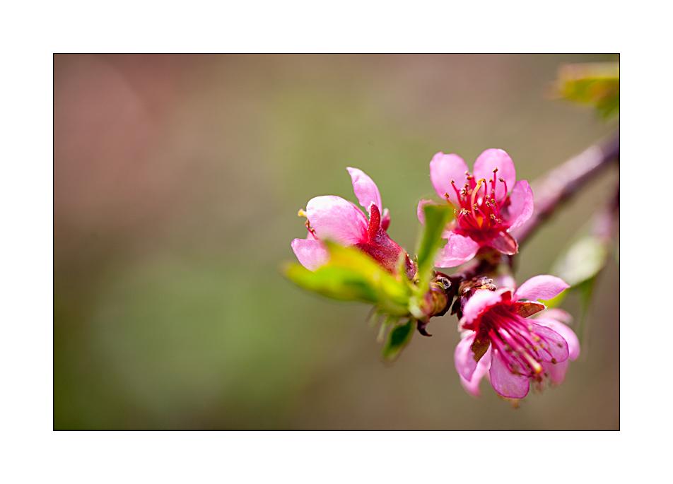 Frühling #06