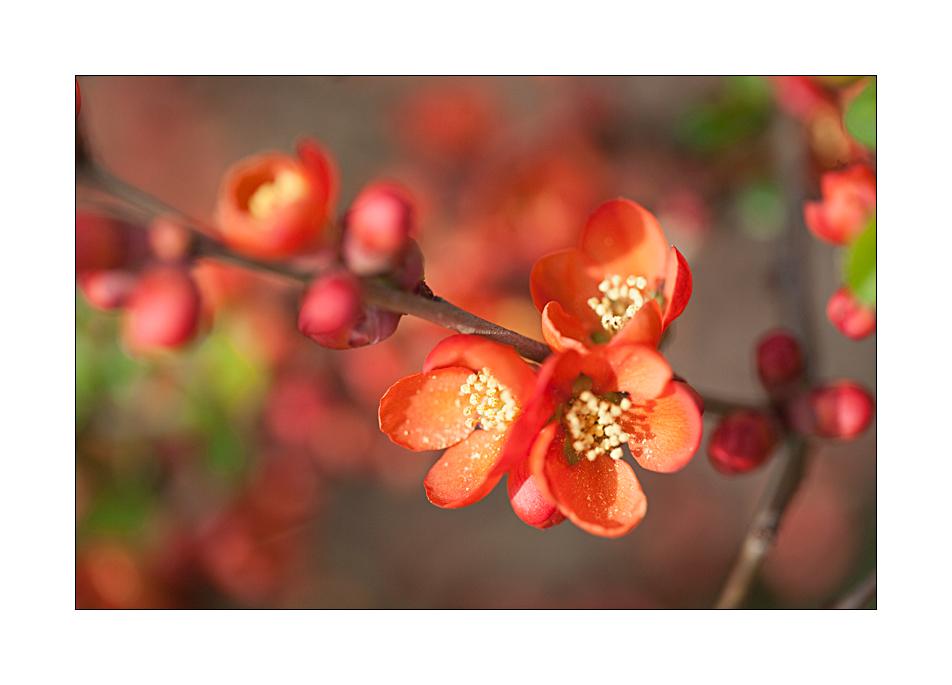 Frühling #07