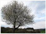 Frühling 07