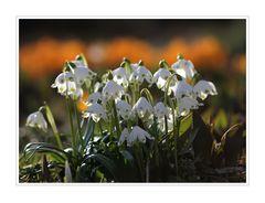 Frühling (1)