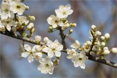 - Frühling -
