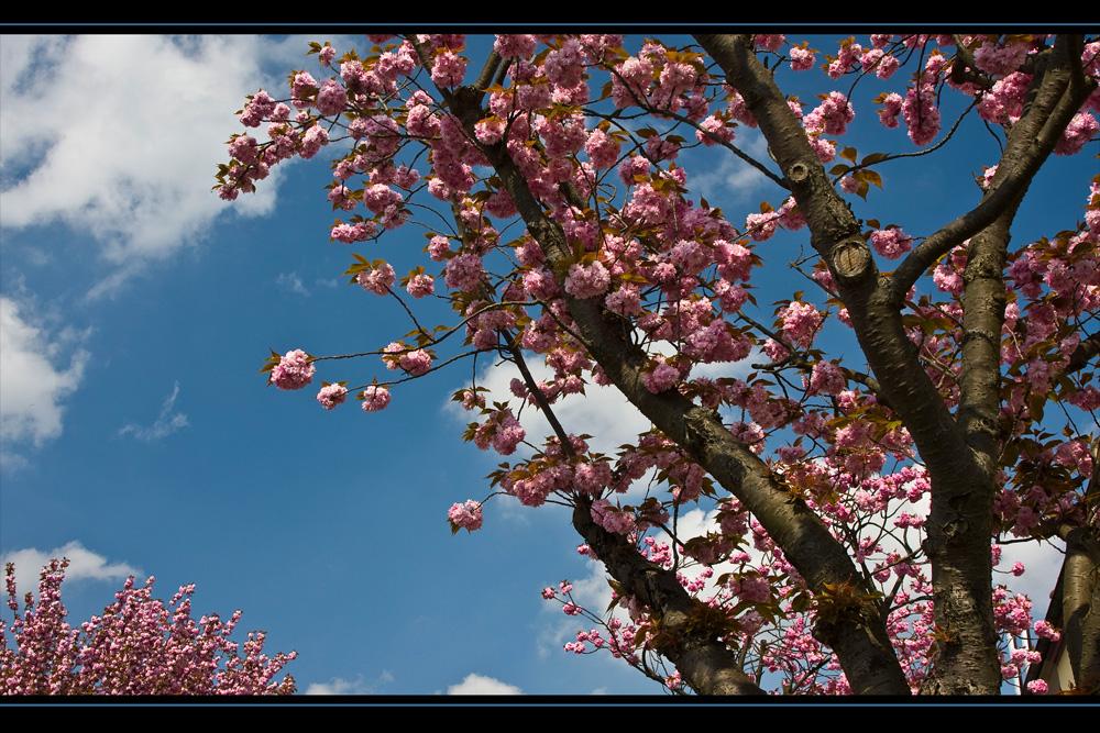 Frühling # 2