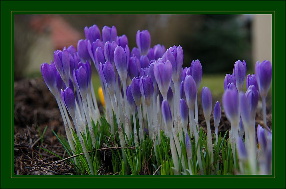 Frühling (2)