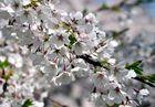 Frühling 2
