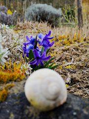 Frühling. 2