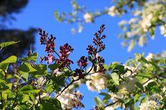 ...Frühling (2)...