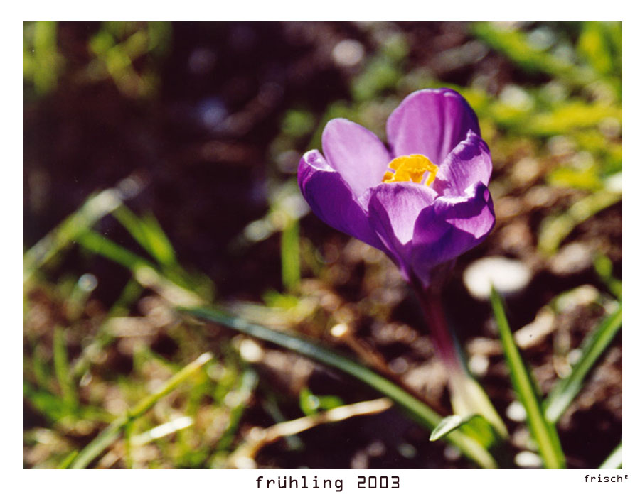 frühling 2003