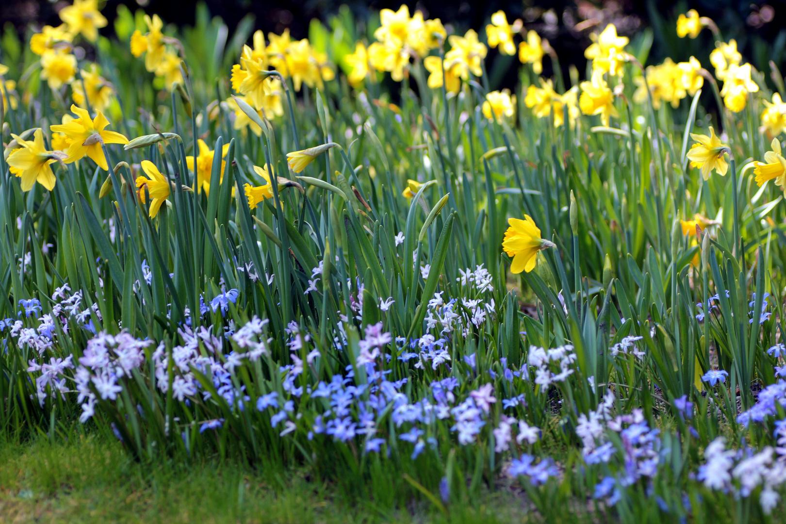 Frühling 2012