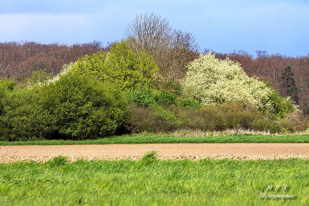 Frühling 2017 (3)