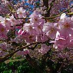 Frühling :-)))