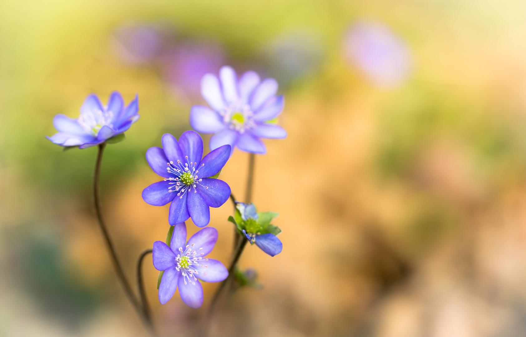 Frühling :-))) Foto & Bild | outdoor, sonne, licht Bilder auf ...