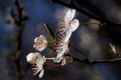 Frühling, -4